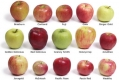 Apples fight cancer