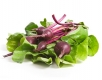 Beet greens fight cancer