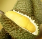 Durian fights cancer