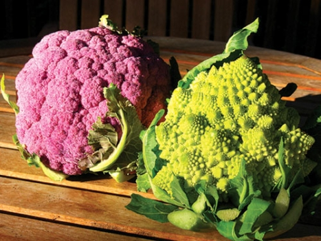 Exotic vegetables fight cancer | ENCOGNITIVE.COM