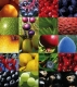 Food sources of antioxidants