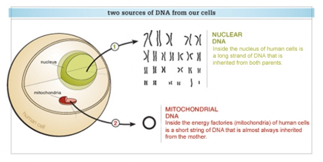 Two sources of our DNA