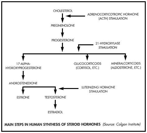 testosterone deficiency in females