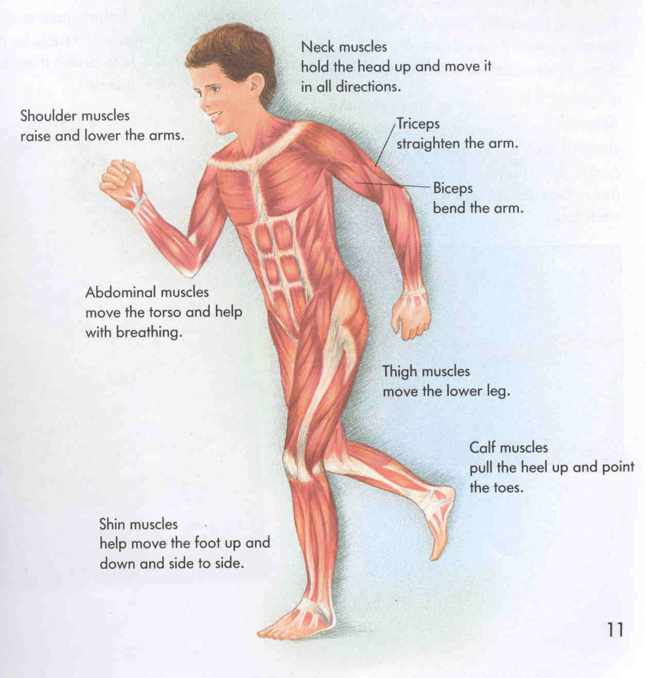 Human+body+diagram+with+n